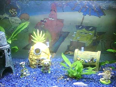 Spongebob schwammkopf aquarium youtube for Spongebob fish tank