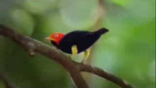 Bird Dancing Like Michael Jackson
