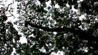Sumpong - Short Film