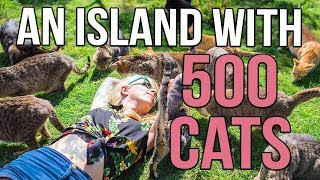 A Tropical Island with 500 CATS! thumbnail