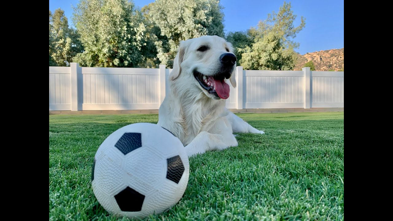 Shiloh's 5-Hour Drop In | Dog Sitting | Ramona