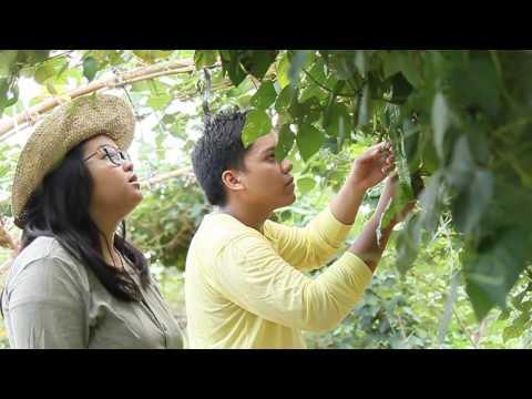 Urban Farming: Make It A Living
