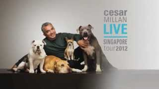 Cesar Millan Live Singapore 2 & 3 June