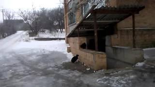 Коты поют серенады