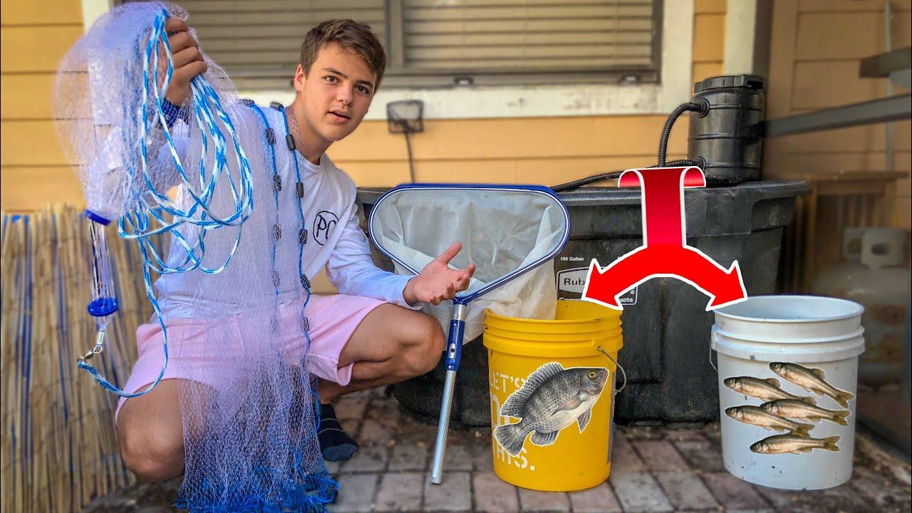 restocking-100g-bait-tank-with-fish