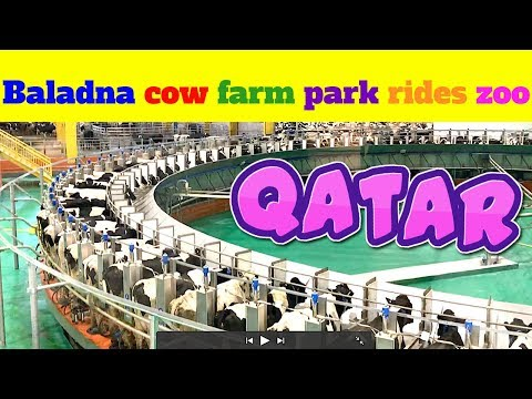 baladna farm Qatar Baladna park Qatar Al Khor Doha Qatar cows location visit review rides zoo goats