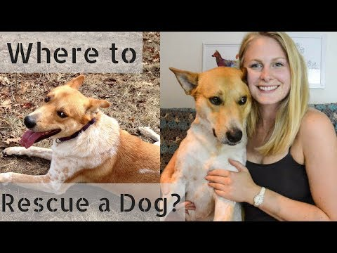Where to Adopt a Dog + What to Avoid!    InRuffCompany.com