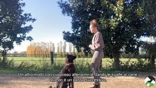 """COME INSEGNARE IL COMANDO """"RESTA"""" AL TUO CANE"""