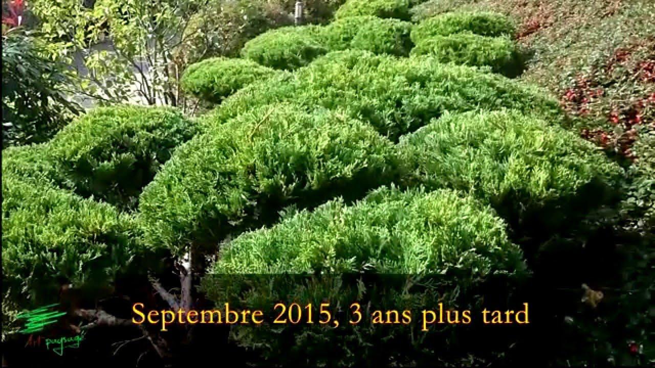 Planter Dans Un Talus nuage dans un talus - juniperus carve shaped cloud ( niwaki ) planted in a  slope