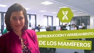 Reproducción y apareamiento de los mamíferos - Biología - digiSchool