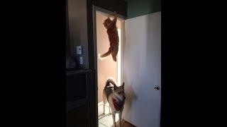 Подборка смешные кошки!!! Funny cats, Прикольные, ржачные,веселые коты,кошки ,котята, зверки
