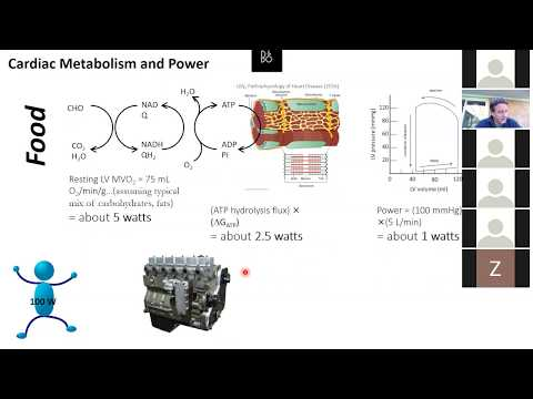How metabolic energy supplies determines myocardial mechanical power output