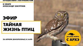 Детский эфир «Тайная жизнь птиц» в рамках рубрики «Путешествия с натуралистом»