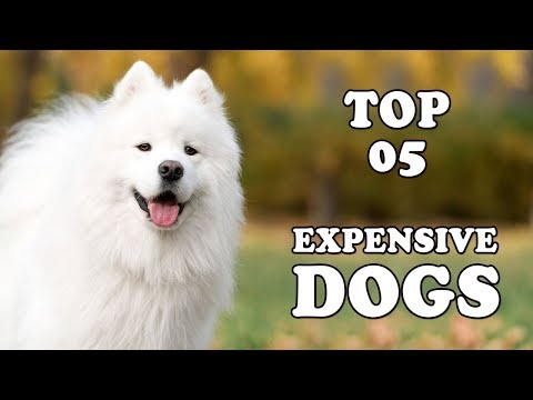 Top 5 Most Expensive DOG BREEDS In The World 2018 | Expensive Dogs