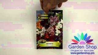 Цветы для невесты - семена Lathyrus Latirus