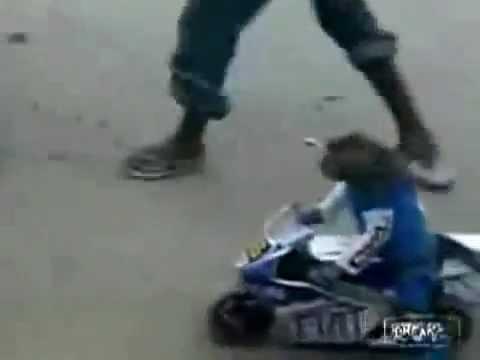 Des singes qui font de la mini moto