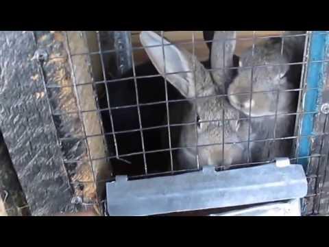 как сделать клетку для кроликов своими руками в домашних условиях