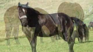 Les Percherons noirs du fayet