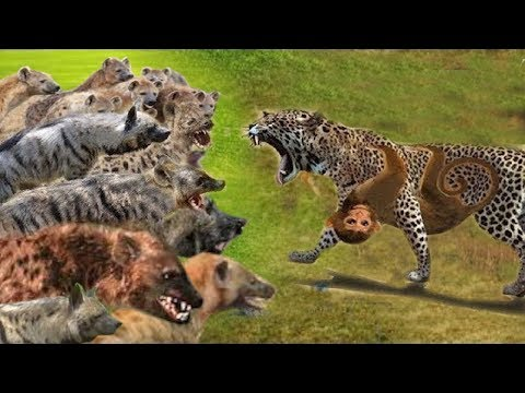Wild Dogs vs Leopard vs Hyena vs Lion Survival Battle - Wild Animals 2018
