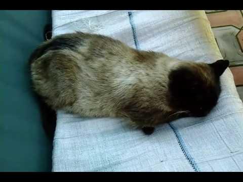 Мой котик Барсик спит