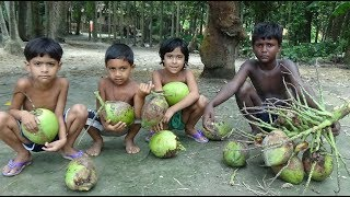 Small Children Climb a Coconut Tree and Failing Many Coconut Fruits From  Coconut Tree