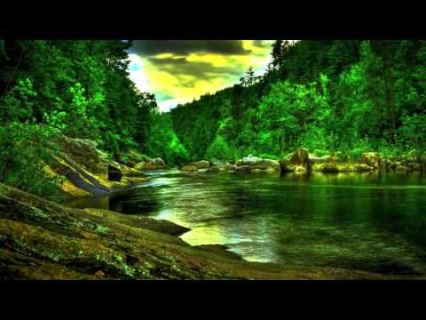 Rainforest Nature Sound Relaxation