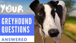 Greyhound Questions Answered