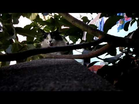 Billy, the black and white cat, hiding in the tree [Natural sounds]