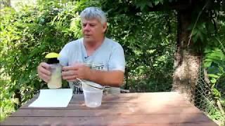 Fener tuzakları hazırlama ve dağıtma yakalamak Küçük Kovan Böceği: