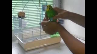 Уход за попугаями/Как ухаживать за попугаями/PUP