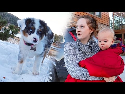 PUPPY SNOW REACTION!