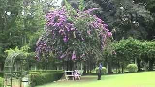 SRI LANKA Peradeniya botanical garden, Kandy (sd-video)