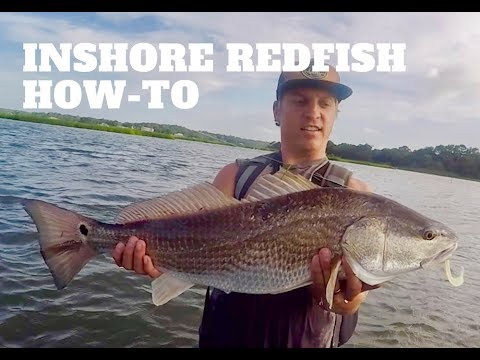 How to catch Redfish (Red Drum) - Redfish tips for inshore shallow water