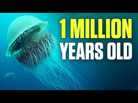 10 Oldest Living Creatures On Earth