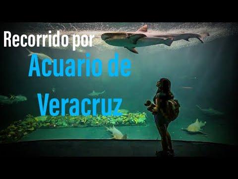 Acuario De Veracruz