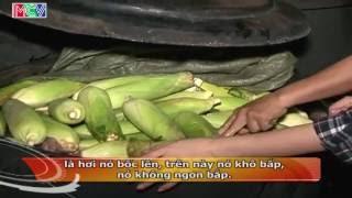 [Phóng sư] - sự thật về nghề nấu - bán bắp luộc.