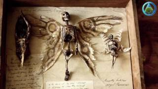 Mystery of winged tiny human skeletons found in basement of old London house