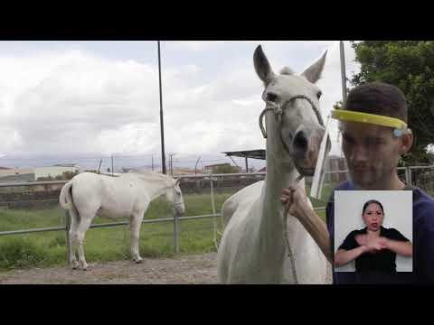 La Caja Costarricense de Seguro Social dio a conocer, el pasado viernes 2 de octubre, los …