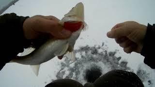 Рыбалка пробный выезд на судака