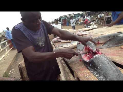 Catfish in Ggaba Lake Victoria Uganda