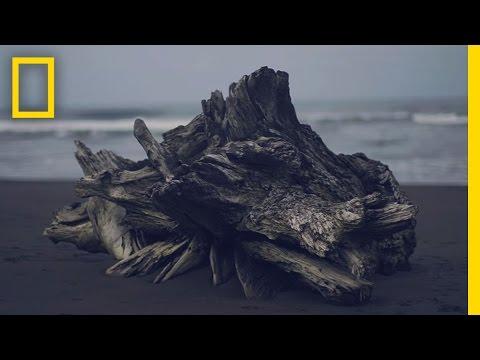 "Experience Costa Rica's ""Pura Vida"" in Under 3 Minutes | Short Film Showcase"