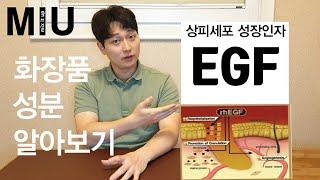 화장품 성분 알아보기_EGF
