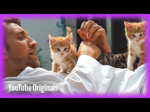 Slow Mo 4K Kittens