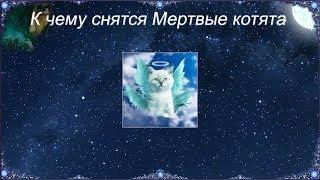 К чему снятся Мертвые котята (Сонник)