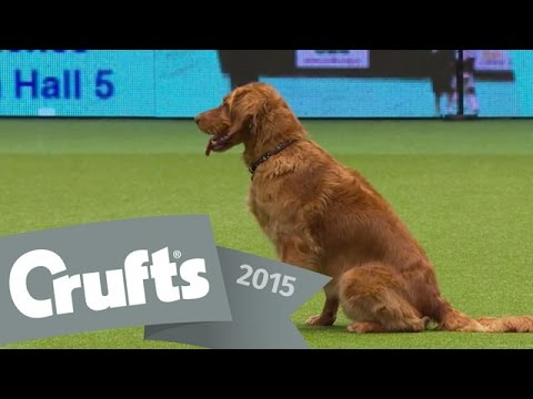 Obedience Winners | Crufts 2015