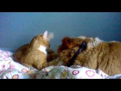 Koira ja kissa leikkii =) - YouTube