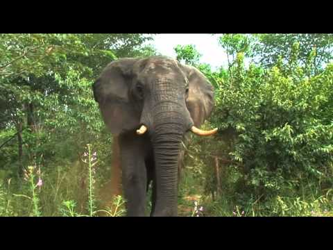 Muchenje Safari Lodge - Botswana - BBI Media