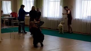 Монопородная выставка собак