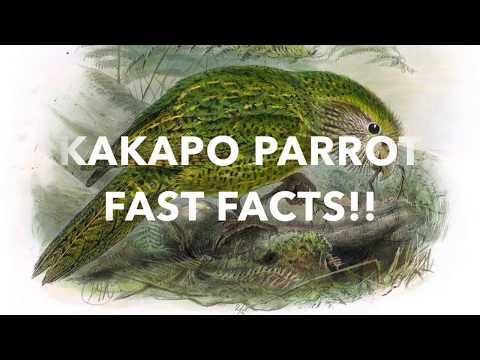 Kakapo Parrot fast facts
