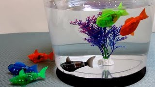HexBug AquaBot 1.0 - The Robotic Pet Toy that Really Swims - Fish & Shark - Detailed hands on review